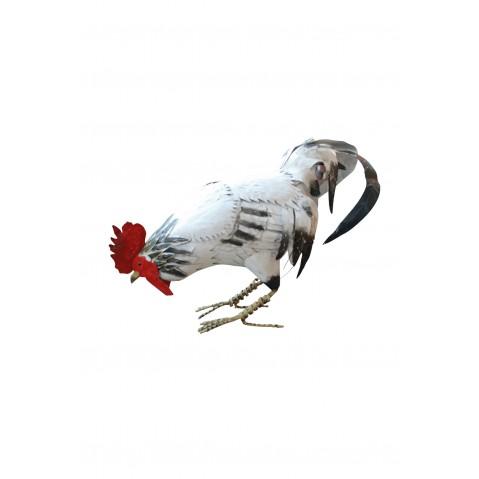 Coq picorant